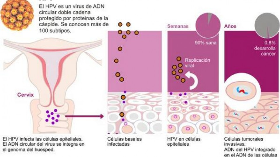 hpv genitális herpeszvírus mik a külső szemölcsök